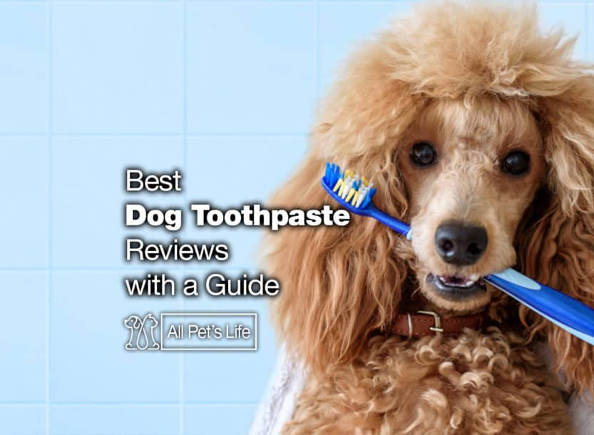 best dog toothpaste reviews guide
