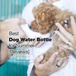 Best Dog Water Bottle: 12 Options for 2021 Summer [Reviews]