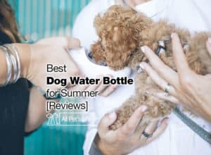 Read more about the article Best Dog Water Bottle: 12 Options for 2021 Summer [Reviews]