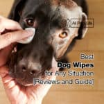 12 Best Dog Wipes for Any Situation [2021 Reviews and Guide]