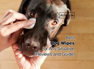 Read more about the article 12 Best Dog Wipes for Any Situation [2021 Reviews and Guide]