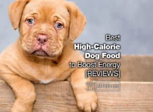 Read more about the article 12 Best High-Calorie Dog Food to Boost Energy [2021 REVIEWS]