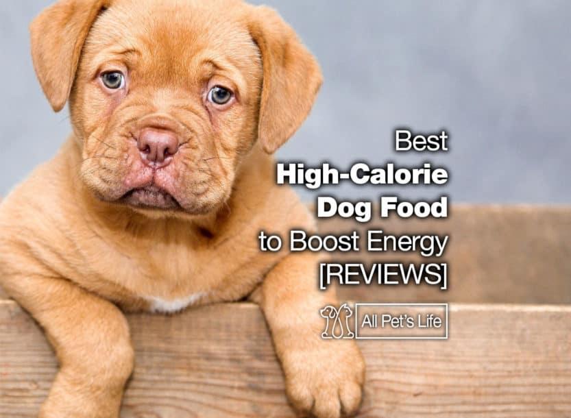 best high calorie dog food