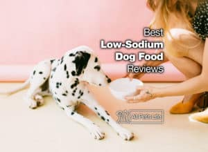 Read more about the article 15 Best Low Sodium Dog Food Options in 2021 [REVIEWS]