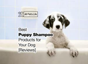 Read more about the article 12 Best Puppy Shampoo Products for Your Dog [2021 Reviews]