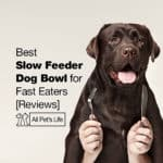 10 Best Slow Feeder Dog Bowl for Fast Eaters [Reviews 2021]