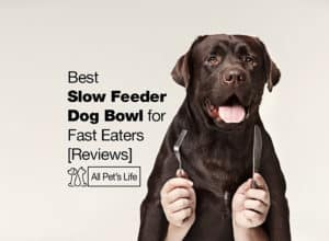Read more about the article 10 Best Slow Feeder Dog Bowl for Fast Eaters [Reviews 2021]