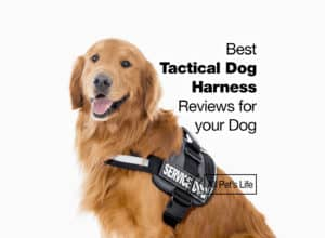 Read more about the article 12 Best Tactical Dog Harness Reviews for your Dog [2021]