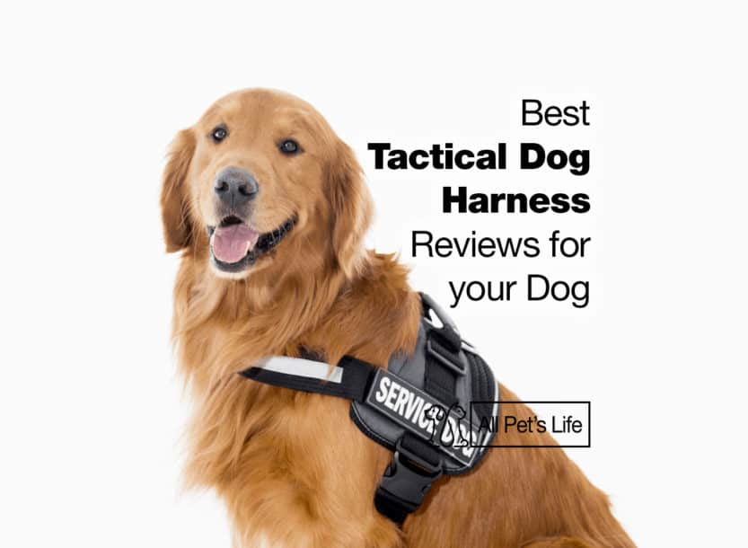 best tactical dog harness
