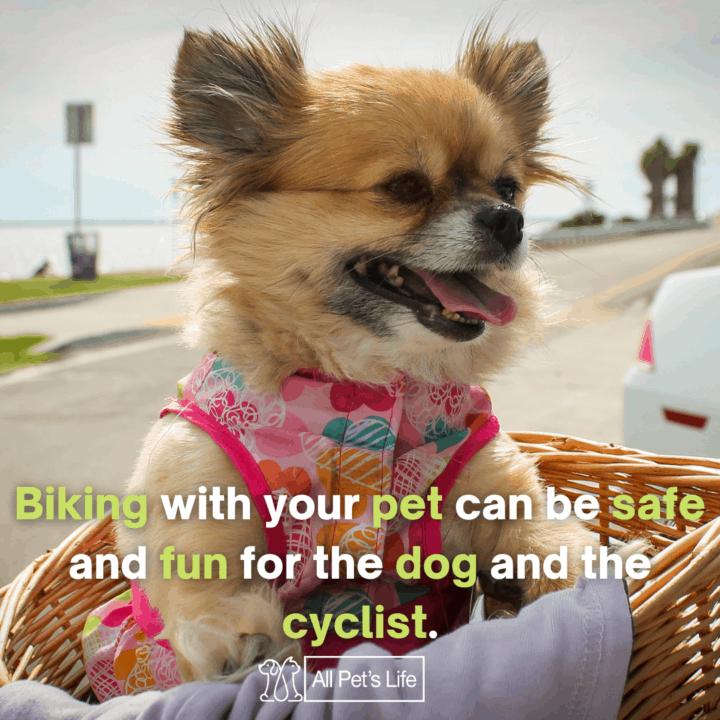 dog riding in a bike basket