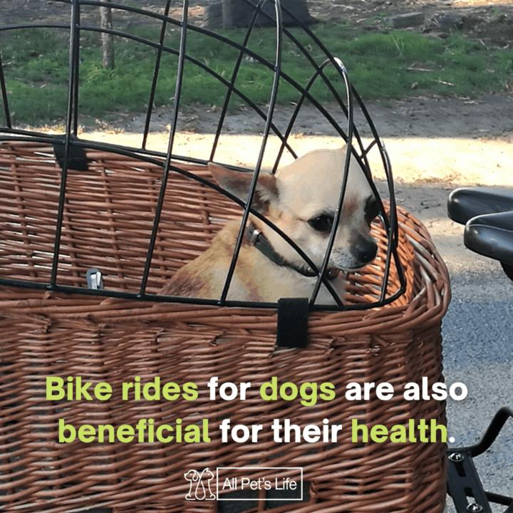 dog inside a dog bike basket