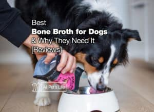 Read more about the article 11 Best Bone Broth for Dogs 2021 Why They Need It [Reviews]