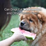 Can Dogs Eat Watermelon +9 More Human Foods for Your Dog