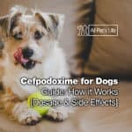 Cefpodoxime for Dogs Guide: How it Works [Dosage & Side Effects]