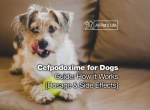 Read more about the article Cefpodoxime for Dogs Guide: How it Works [Dosage & Side Effects]