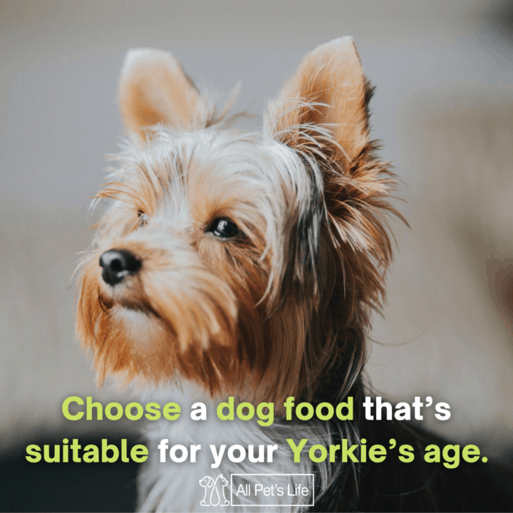 Best Dog Food for Yorkies: choose a dog food thats suitable for your yorkie