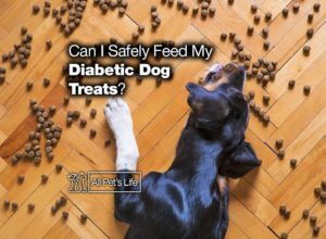 Read more about the article Can I Safely Feed My Diabetic Dog Treats? [2021 REVIEWS]