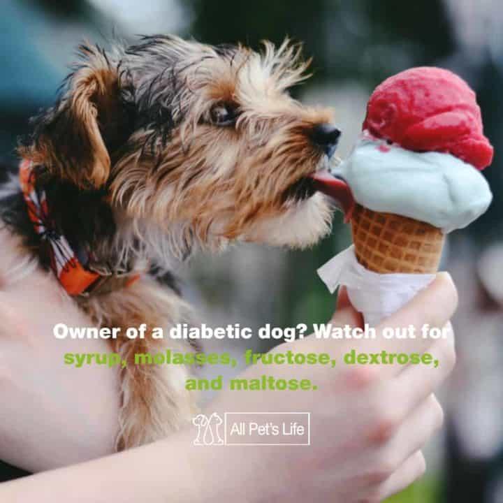 diabetic dogs sugar