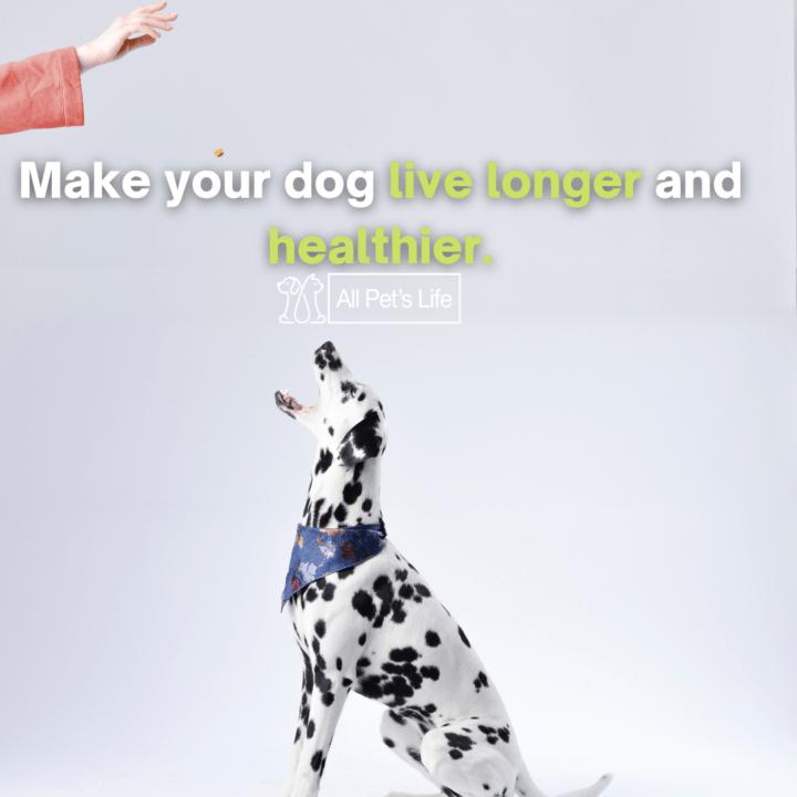 dog being fed