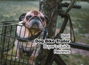 Read more about the article 10 Best Dog Bike Trailer Reviews [2021 Buyer's Guide]