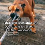 Dog Bite Statistics and Dog Attacks 2021 (by Breed, US State, Worldwide)