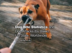 Read more about the article Dog Bite Statistics and Dog Attacks 2021 (by Breed, US State, Worldwide)