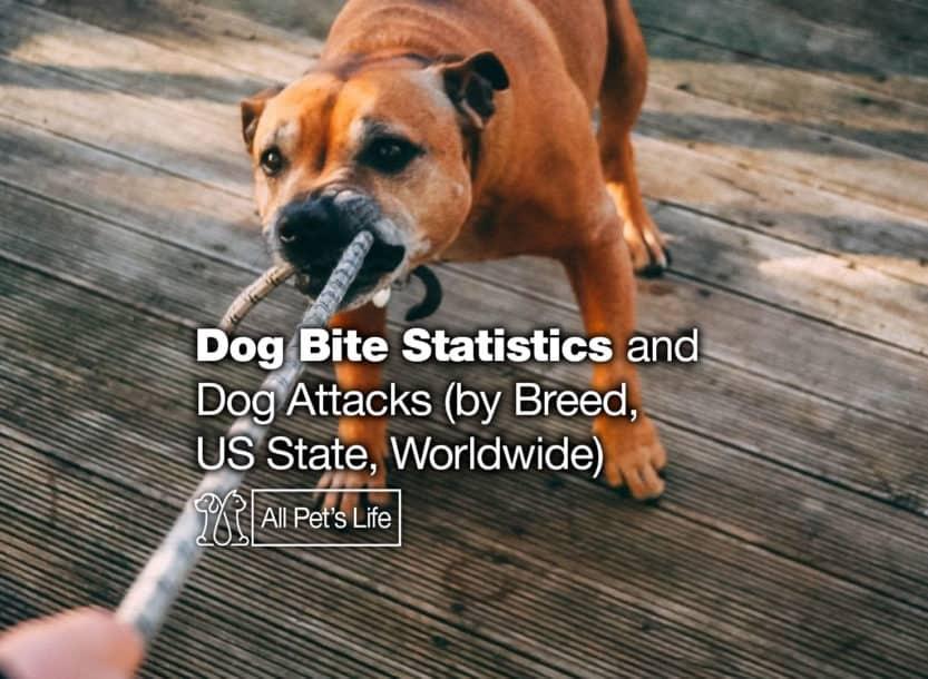 dog bite statistics attacks breed us worldwide