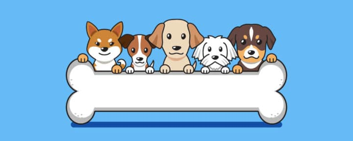 dog breeds with the longest lifespan