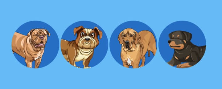 dog breeds with the shortest lifespan