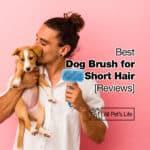 10 Best Dog Brush for Short Hair Reviews [2021]