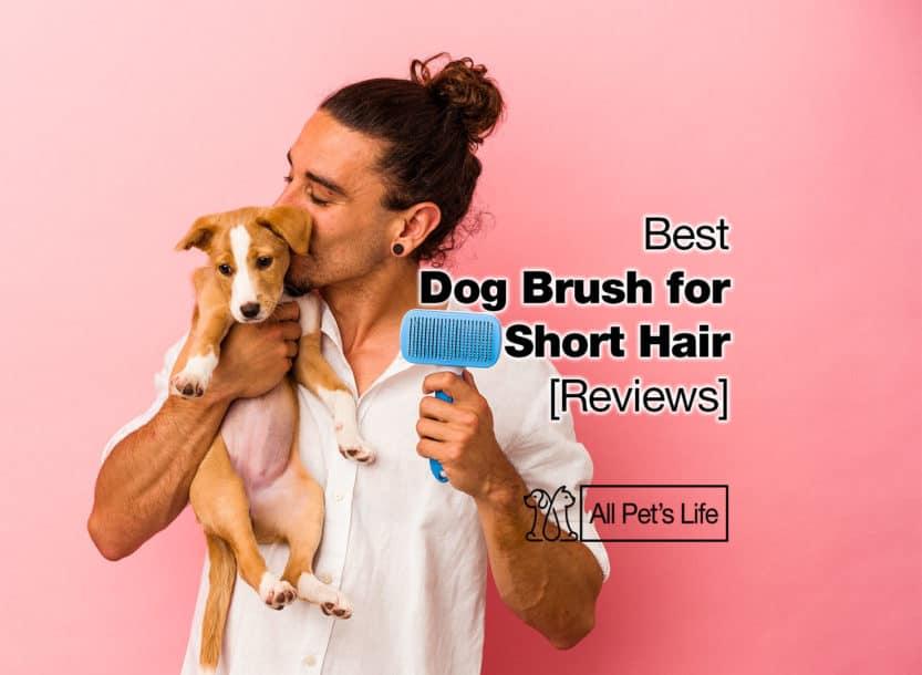 dog brush for short hair