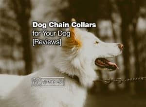 Read more about the article 12 Dog Chain Collar Products for Your Dog [2021 Reviews]