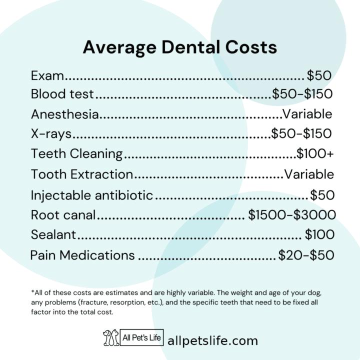dog dentist near you average dental c
