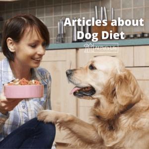 woman feeding a dog
