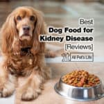 17 Best Dog Food for Kidney Disease Reviews [2021]