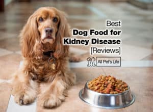 Read more about the article 17 Best Dog Food for Kidney Disease Reviews [2021]