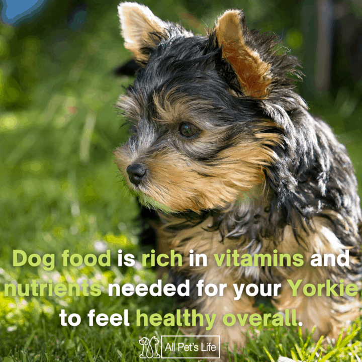 dog food is rich in vitamins and nutrients needed for your yorkie to feel healthy overall