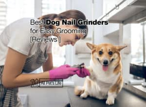 Read more about the article 10 Best Dog Nail Grinder Reviews for Easy Grooming [2021]