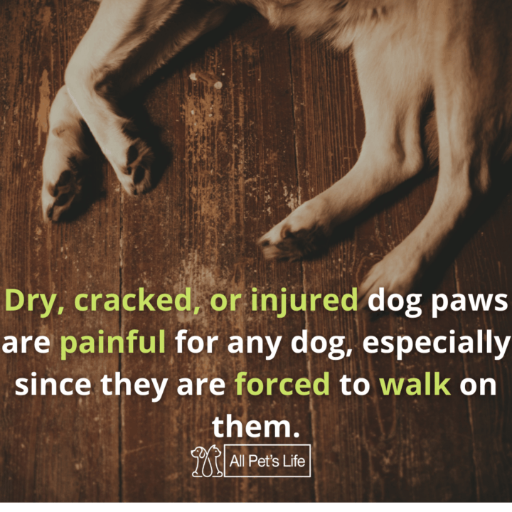 dog paw cleaner injuries