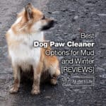 9 Best Dog Paw Cleaner Options for Mud and Winter [2021 REVIEWS]
