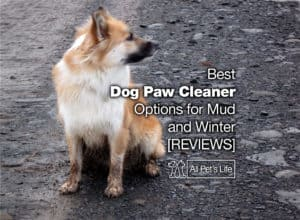 Read more about the article 9 Best Dog Paw Cleaner Options for Mud and Winter [2021 REVIEWS]
