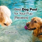 11 Best Dog Pool Options for Your Pup [2021 Reviews]