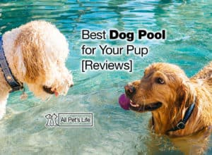 Read more about the article 11 Best Dog Pool Options for Your Pup [2021 Reviews]