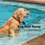 Best Dog Pool Ramp: 7 Reviews – Be Safe [2021]