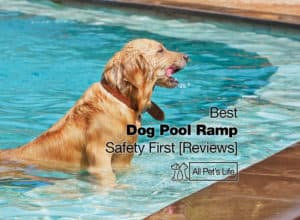 Read more about the article Best Dog Pool Ramp: 7 Reviews – Be Safe [2021]