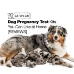 7 Dog Pregnancy Test Kits You Can Use at Home [2021 REVIEWS]