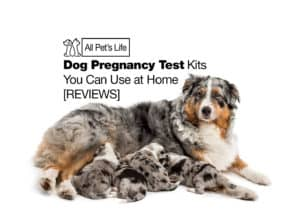 Read more about the article 7 Dog Pregnancy Test Kits You Can Use at Home [2021 REVIEWS]