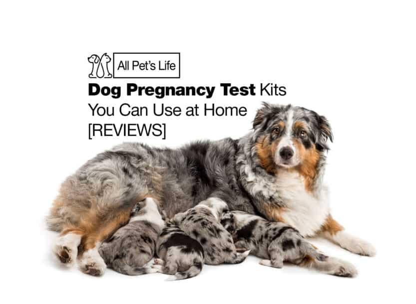 dog pregnancy test