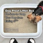12 Dog Proof Litter Box Choices to Keep Your Dog from Eating S***