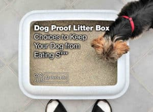 Read more about the article 12 Dog Proof Litter Box Choices to Keep Your Dog from Eating S***